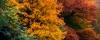 podzimní listí na Hvězdě