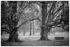 Pražská stromovka